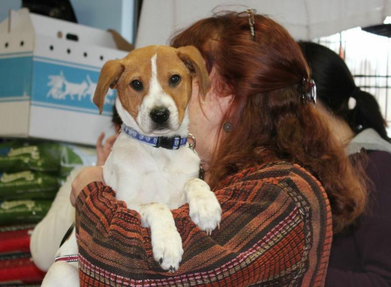 Underhound Railroad Dog Rescue