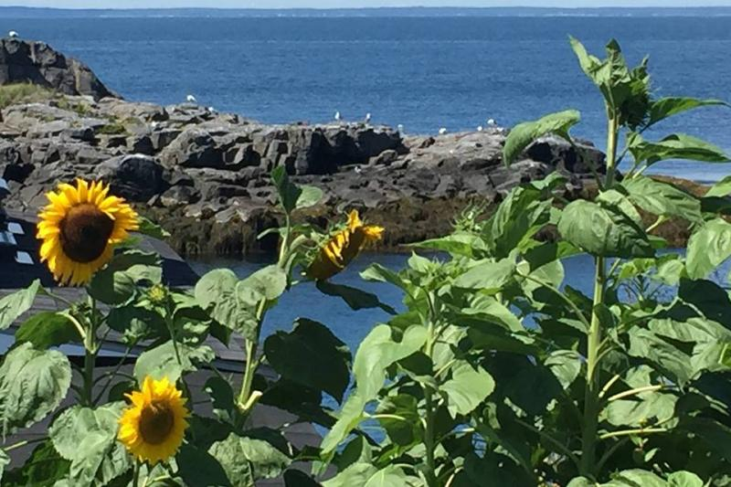 Where It's At     Monhegan Island | Wiscasset Newspaper