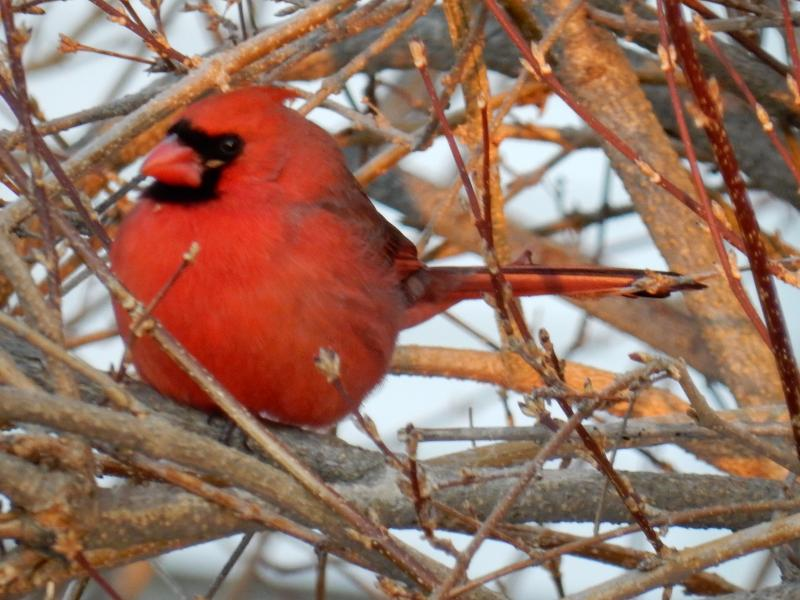 A Maine Great Backyard Bird Count 2019 Roundup | Wiscasset ...