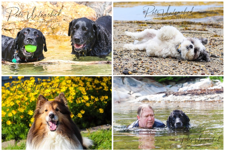 Pets Unleashed Photography