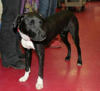 Coda, a well-mannered lab mix, is the only dog who wasn't adopted February 23