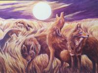 Coyote Medicine by Helen Warren